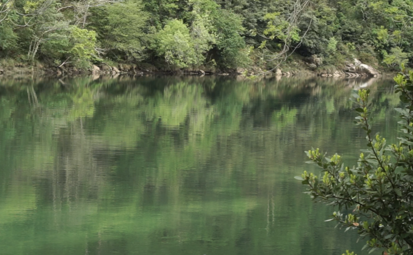 5 Razones por las que querer plantar un árbol en Galicia.